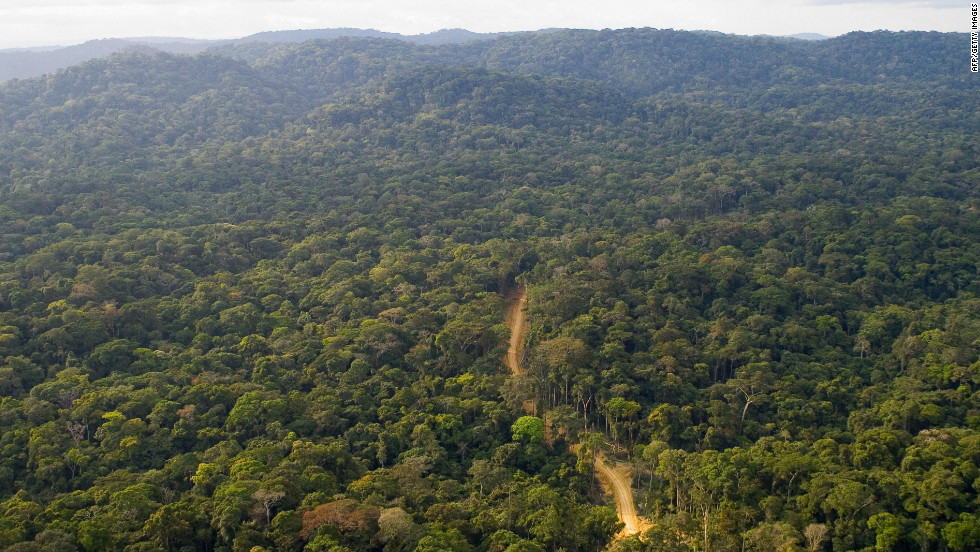 "About 80 per cent of Gabon is covered by forests, sheltering a rich variery of wildlife. The west African country recently branded itself ""Green Gabon"" as part of plans to create the so-called ""green oil"" that the country's ecosystem provides."