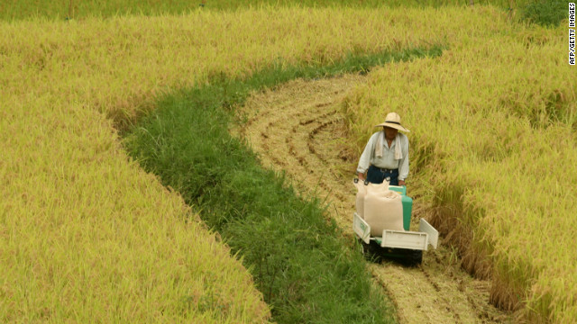 Reviving rice paddies is tied to reconstructing livelihoods in parts of Japan's Tokoku region