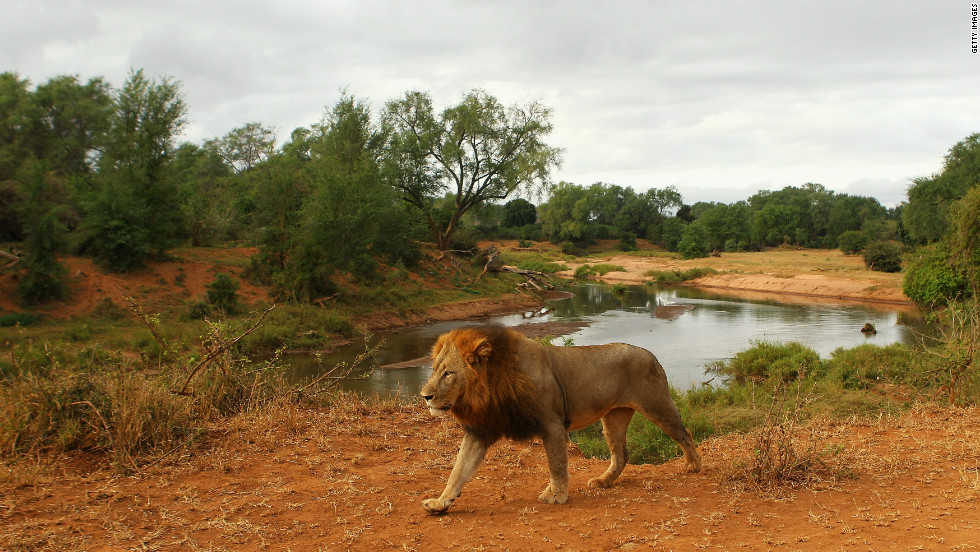 Kruger National Park, the biggest national park in South Africa, covers an area of 7,523 square miles.