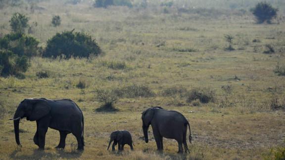 Kruger National Park is South Africa