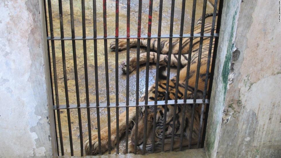 Animals suffer amid delays over Indonesia zoo rescue - CNN