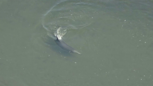 Dolphin refuses to leave narrow channel