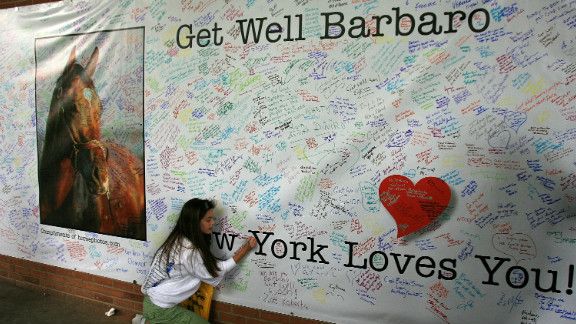 """Hundreds of fans signed a giant """"Get Well"""" card for Barbaro. Although efforts were made to save the colt"""