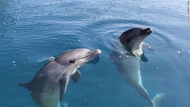 Rescued dolphins ready for release