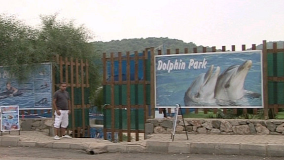 Dolphin parks like the one that held Tom and Misha are common in Turkey