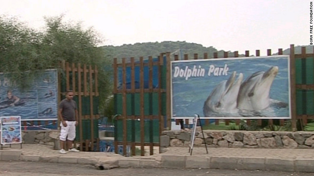 Dolphin parks, like the one where Misha and Tom were found, are prevalent in Turkey, although not fully regulated.