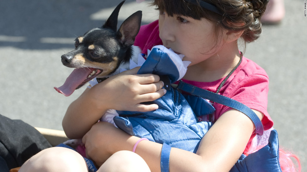 Karol Tarelo, 6, cuddles her Chihuahua friend, Gus, before the parade.