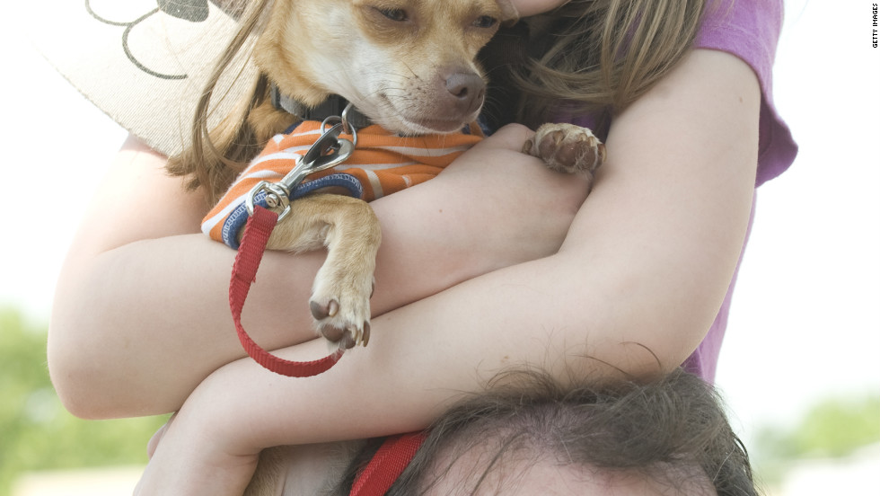 Brooke Hirsch and Peanut the Chihuahua  enjoy an elevated view from her father's shoulders.
