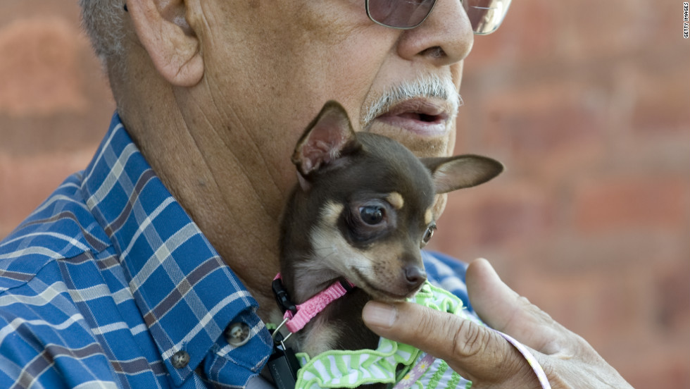 Arnulfo Mendoza cradles Jenny, his 8-week-old Chihuahua puppy, in advance of the parade.