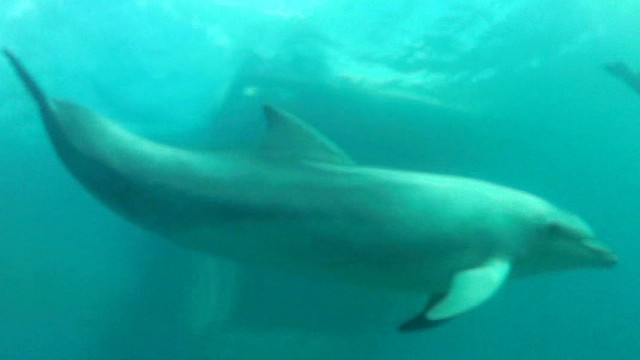 Captive dolphins returned to wild