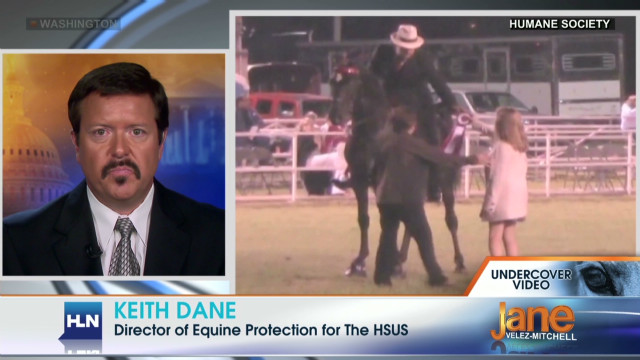Undercover video shows horse abuse