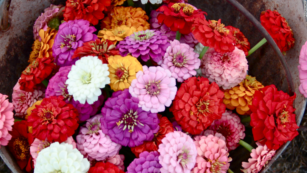 The group sold zinnias, among other things, at the local farmers market.