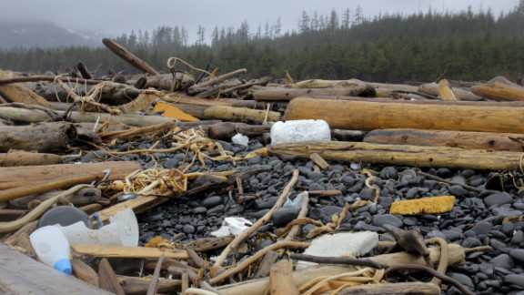 """It's been more than a year since a massive quake devastated northeast Japan, and the debris believed to be from that disaster is now washing up more than 4,000 miles away in Alaska. The Styrofoam that's washing up breaks into little pieces and the wildlife, thinking it is food, will eat it -- causing a negative chain reaction. """"The little fish are going to eat some of this stuff and not get the nutrition they need,"""" explained Bill Lucey of the Yakutat Salmon Board. """"So they're not going to grow that fast, so they're either going to die or get eaten by predators more readily or they just won't be able to compete in the natural world as well."""""""