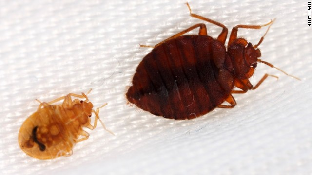 Thick Skinned Bedbugs Are Beating Bug Spray Cnn
