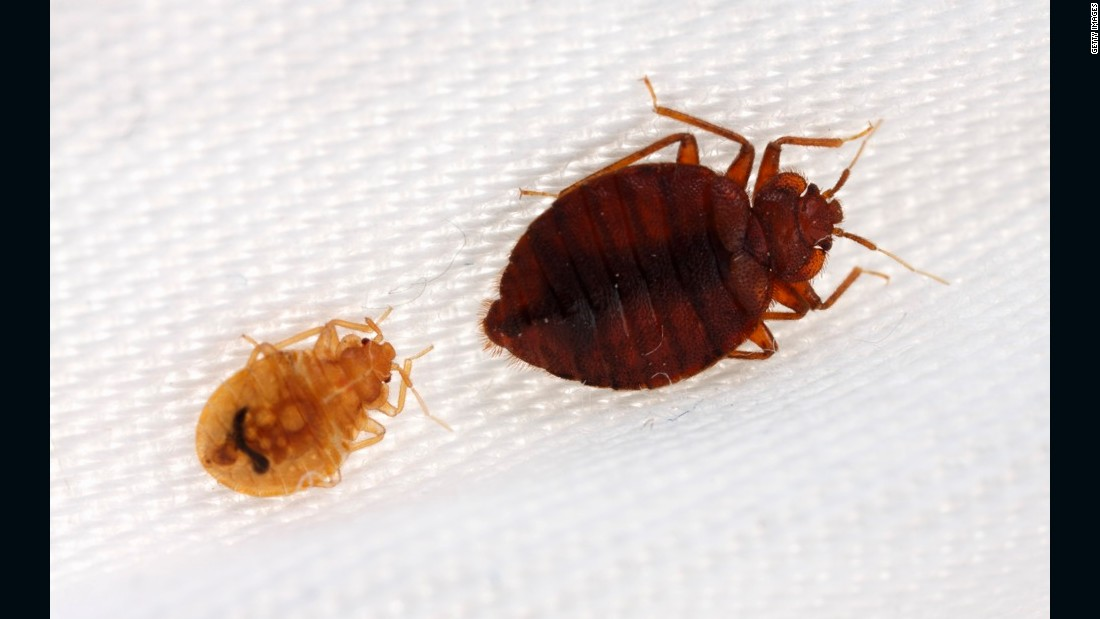 Bedbugs Have Favorite Colors Too Study Finds Cnn