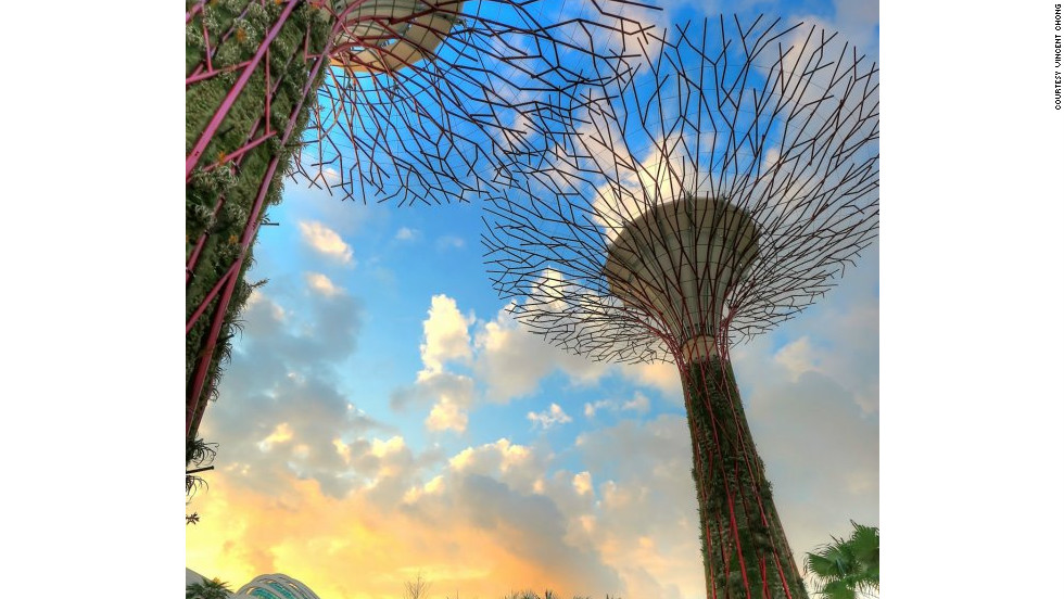 The manmade steel forest consists of 18 supertrees varying from 25 to 50 meters in height. They act as cooling ducts for nearby conservatories, collect rainwater, and 11 of them have solar photovoltaic systems to convert sunlight into energy.