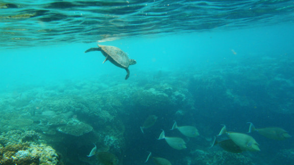 The Great Barrier Reef and Coral Sea reserve will become the world