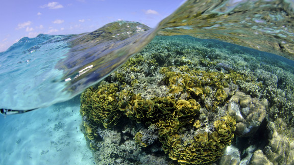 A pristine coral reef in the Federated States of Micronesia in the Western Pacific Ocean. The IUCN says that 33% of reef-building corals are threatened with extinction.