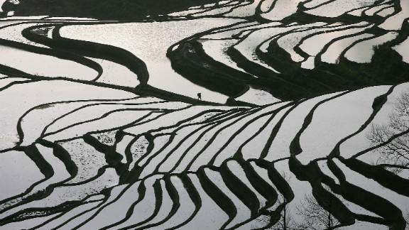 Poor, rural areas are often keen to secure world heritage status as a way to kick start development. The Hani Rice Terraces, which zig zag over mountain slopes in southern Yunnan,  have applied to be considered.