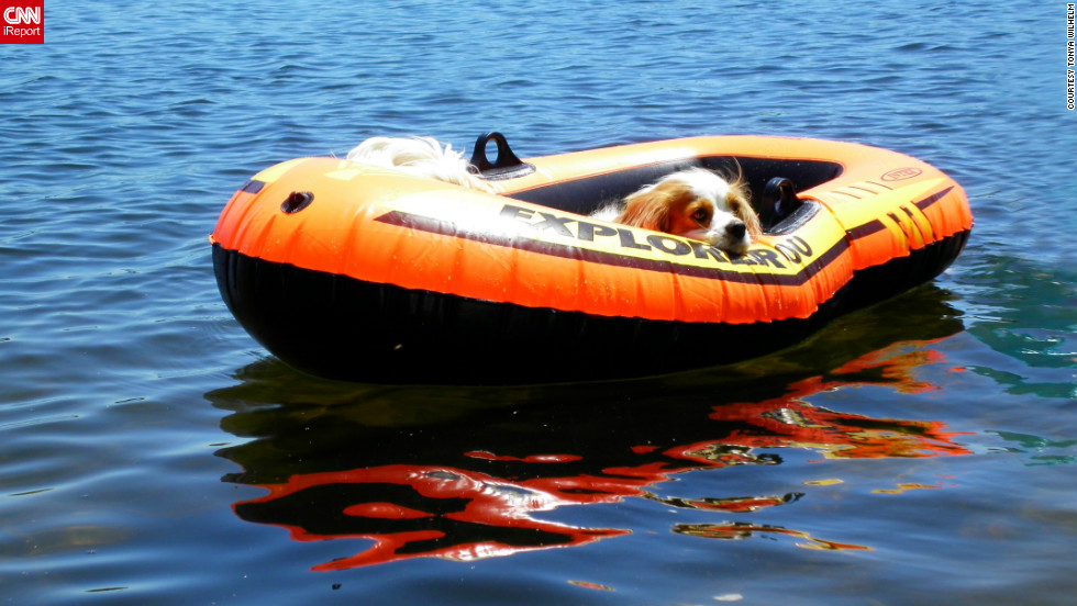 "Dexter, a Cavalier King Charles spaniel, decides it's <a href=""http://ireport.cnn.com/docs/DOC-810973"">too hot even to swim</a> in Constant Lake in Ontario, Canada."