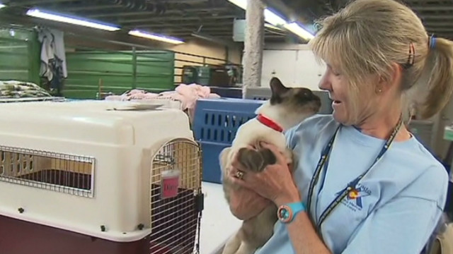 Shelter protects wildfire animal evacuees