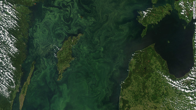 "A satellite image of ""summer blooms"" in the Baltic Sea, usually caused by blue-green algae."