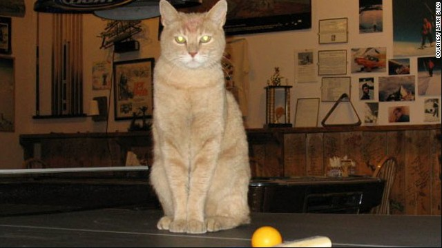 Stubbs the cat  has been mayor of Talkeetna, Alaska, for 15 years, since he was a kitten.