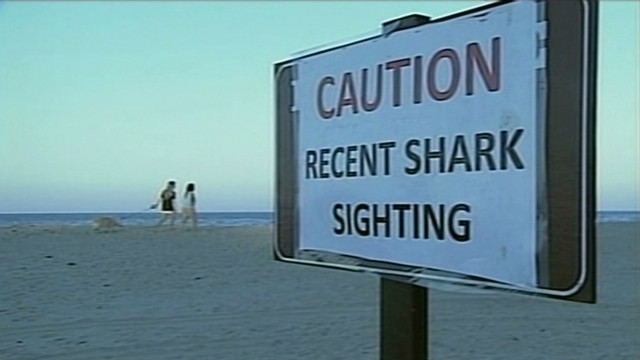 Beach closed after suspected shark bite