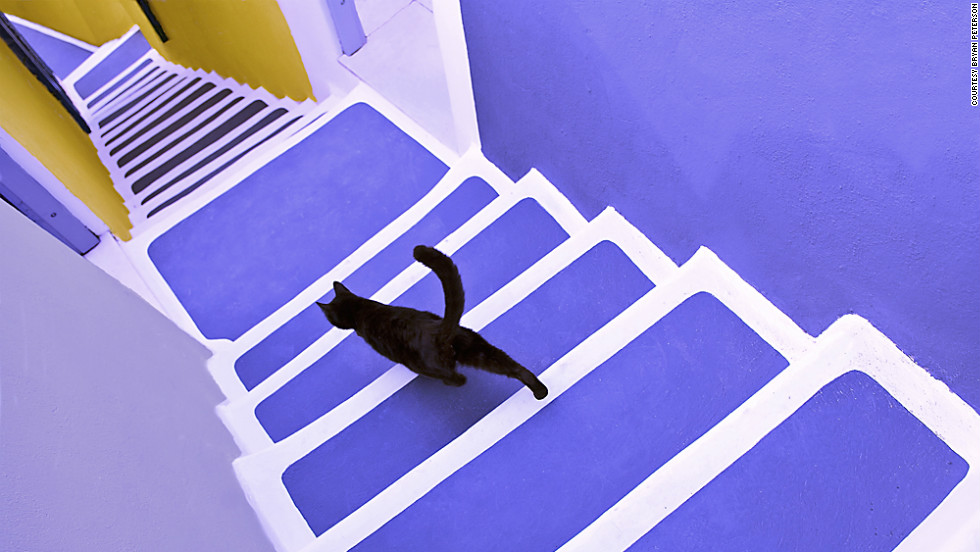 Peterson is fond of including a focal point that stands out from its surroundings, like a red ball in a pool of cool blue water or this black cat amid a palette of purple and yellow.