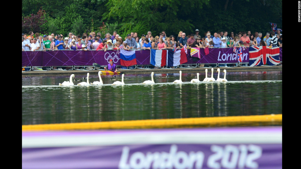Despite their superior abilities, the swans were unable to get in sync and finished sixth.