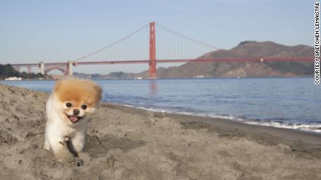 Boo World S Cutest Dog Dies Cnn Video