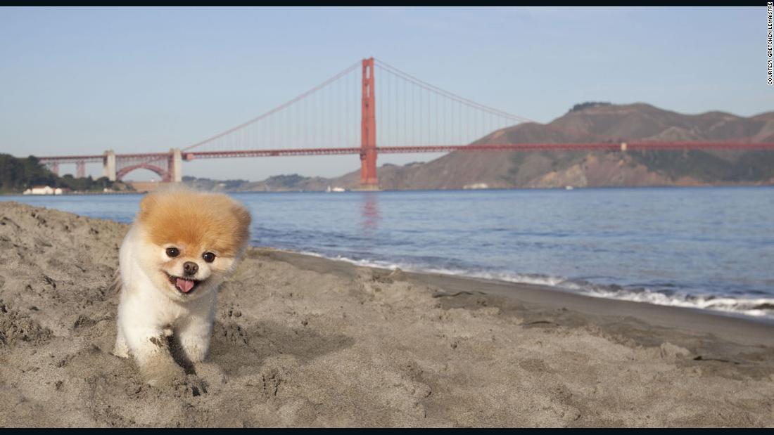 Boo World S Cutest Dog Cnn Video