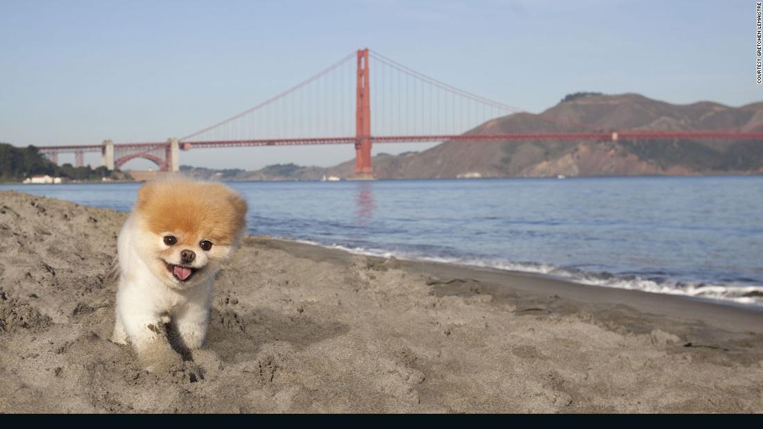 Boo, 'world's cutest dog,' dies aged 12 - CNN thumbnail