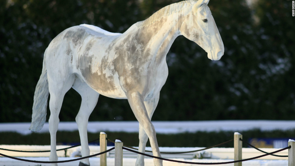 Horse Appeal Why Gray Thoroughbreds Are Great Cnn
