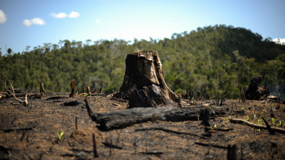 Environmentalists say that activities like slash-and-burn agriculture, logging and charcoal production are all destroying the island's forests.