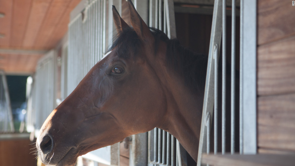 Danedream at her home stables where she has been trained by Peter Schiergen to a string of big race wins.