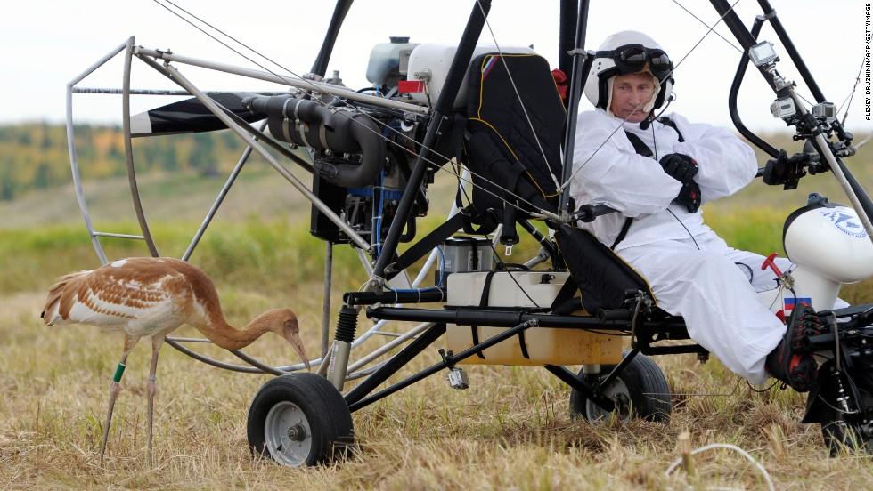 Putin studies a crane during an experiment called Flight of Hope on September 5, 2012, in which he piloted a hang glider, aiming to lead the birds into flight. It's part of a project to save the rare species of crane.