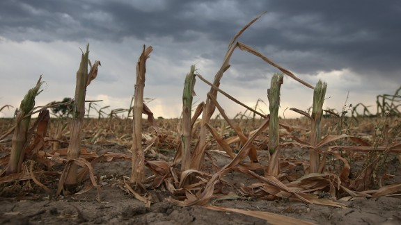 Rain clouds move over the remnants of parched corn stalks near Wiley, on the plains of eastern Colorado, on August 22, 2012. A summer storm came too late to help farmers whose crops were decimated in the exceptional drought in Colorado