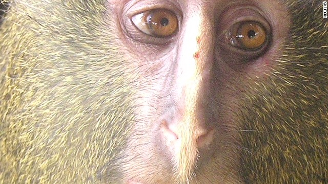 2012: New monkey species discovered