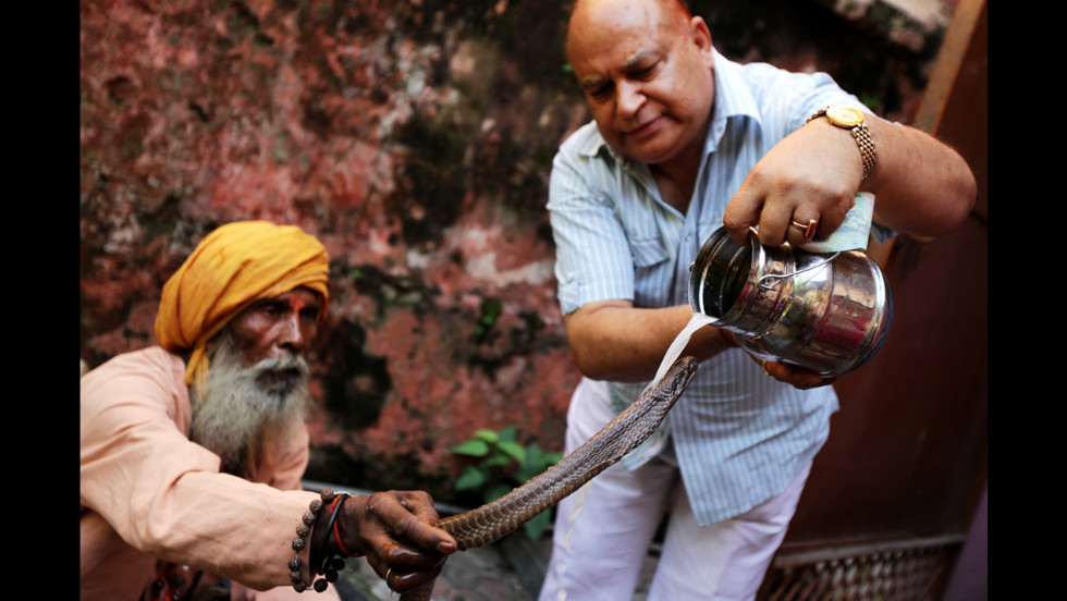An Indian Hindu devotee pours milk over a cobra during a Nag-Panchami ritual at a Shiva Temple in Jammu on Thursday. During the festival of Nag-Panchami, observed during the monsoon season, Hindus give prayers and tributes to snakes.