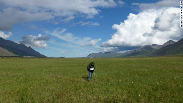 Researcher Shannan Sweet working in the Alaskan tundra in summer. Natalie Boelman says thawing of the tundra could release vast amounts of carbon dioxide and methane into the atmosphere.