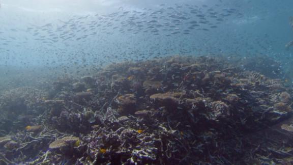 Near Heron Island, Great Barrier Reef