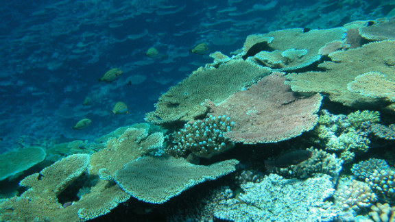A report in October 2012 revealed that half of the coral coverage on the Great Barrier Reef had disappeared over the past 27 years due to a combination of factors: cyclones, the crown-of-thorns starfish and coral bleaching.