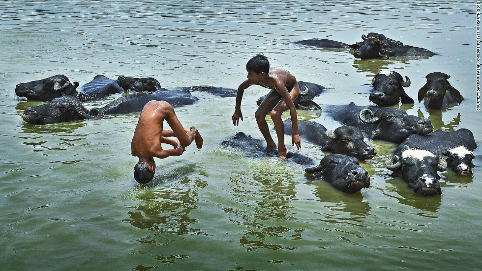 """Peaceful co-existence' 9-year-old Darpan Basak's shot of children playing in a stream with water buffalo."