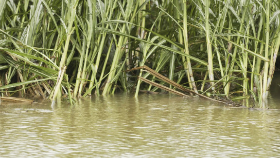 A flooded sugar cane field just outside of Innisfail, North Queensland after Tropical Cyclone Larry cross the coast on March 22, 2006. Cyclones not only smash reefs but increase run-off from agricultural areas.