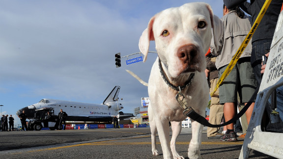A dog joins the crowd turned out to see Endeavour on Friday.