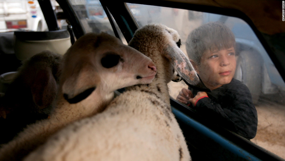 A Palestinian boy looks at goats at a local cattle market in the West Bank village of Qabatiya on Wednesday, October 24.