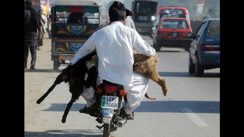 Pakistani men carry animals for the sacrificial festival on a motorcycle in Lahore on Thursday.