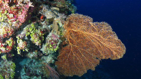 The Catilin Seaview Survey discovered healthy coral populations at depths below 30 meters on the Great Barrier Reef.