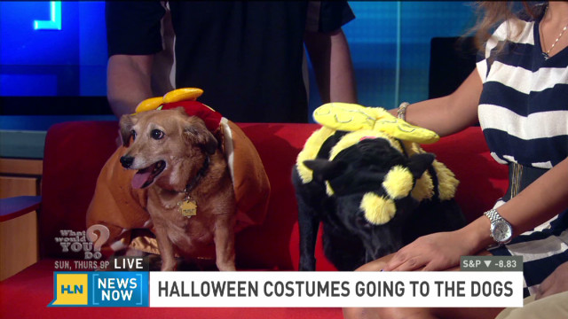 Pet costumes are big business